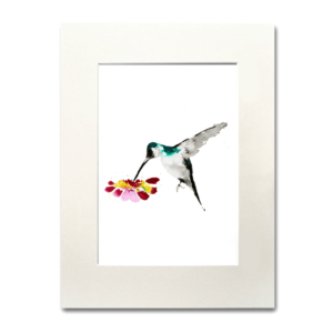 bird Beija-flor aguarela Nina fraser