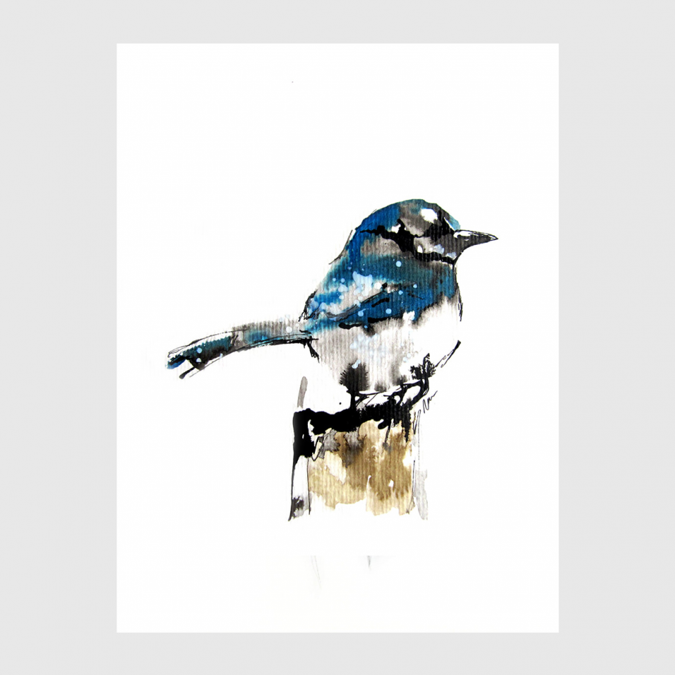 bird American Jay watercolor by Nina fraser