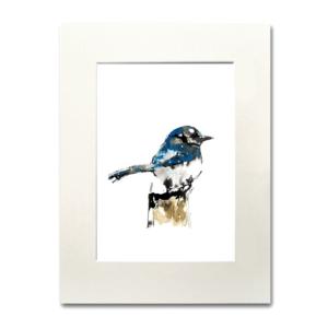 bird American Jay aguarela Nina fraser