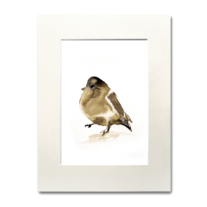 bird Tree Swallow II aguarela Nina fraser