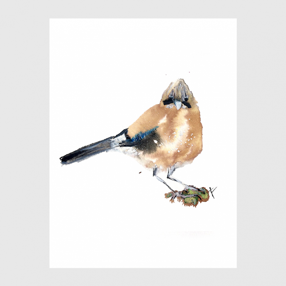 bird Jay watercolor by Nina fraser