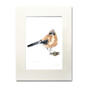 bird Jay aquarelle Nina fraser