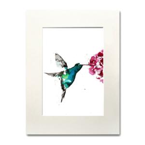 bird Hummingbird aguarela Nina fraser