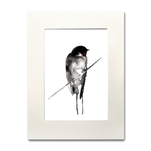 bird Swallow aguarela Nina fraser