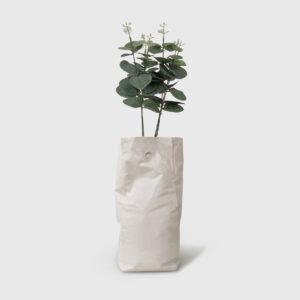 jar plant
