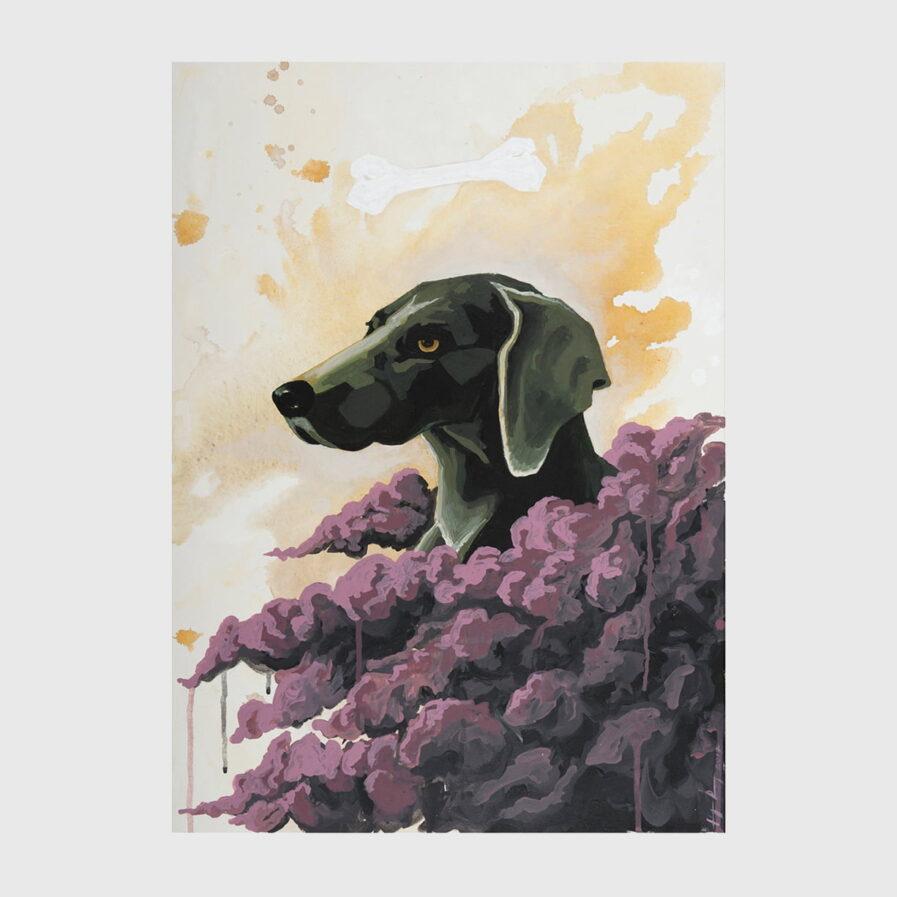 dog sky