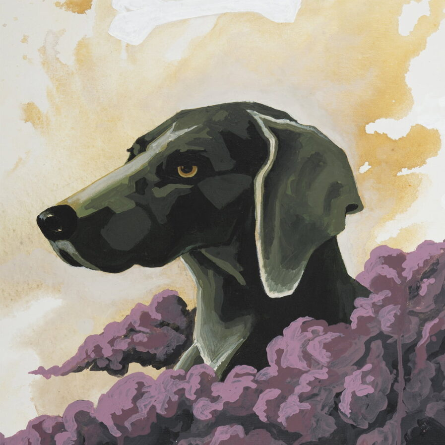 detail dog sky